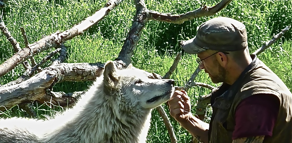 Wolf Hollow Assistant Director Zee Soffron connects with a wolf
