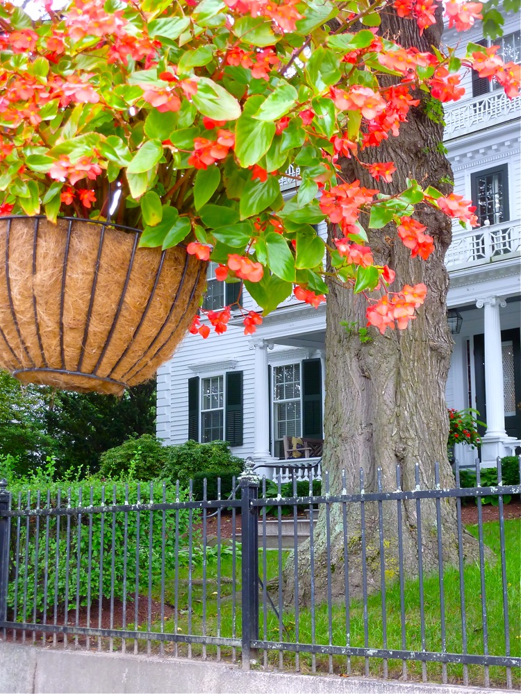 Flower basket and historic home in downtown Bristol, R.I.