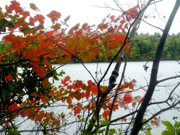 Fall foliage at Walden Pond, Concord MA