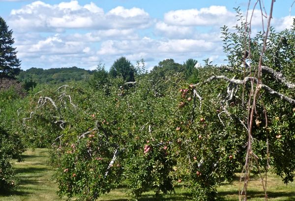 Phantom Farms apple orchard, Cumberland RI