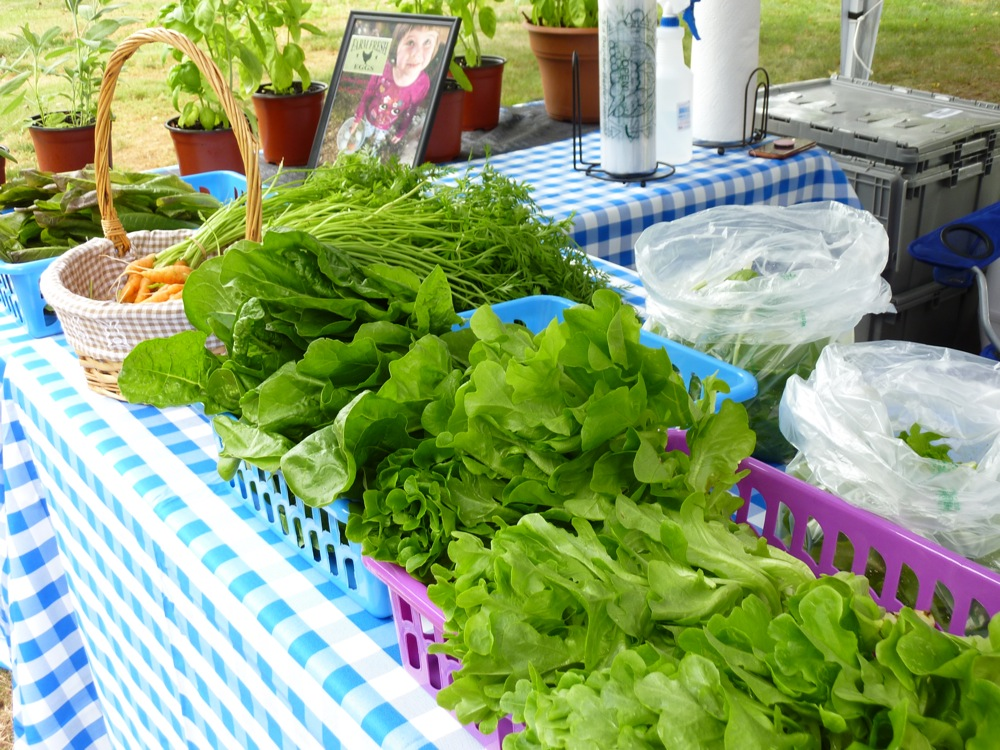 Greens from Firefly Meadows at the Walpole Farmers Market in Walpole, Massachusetts