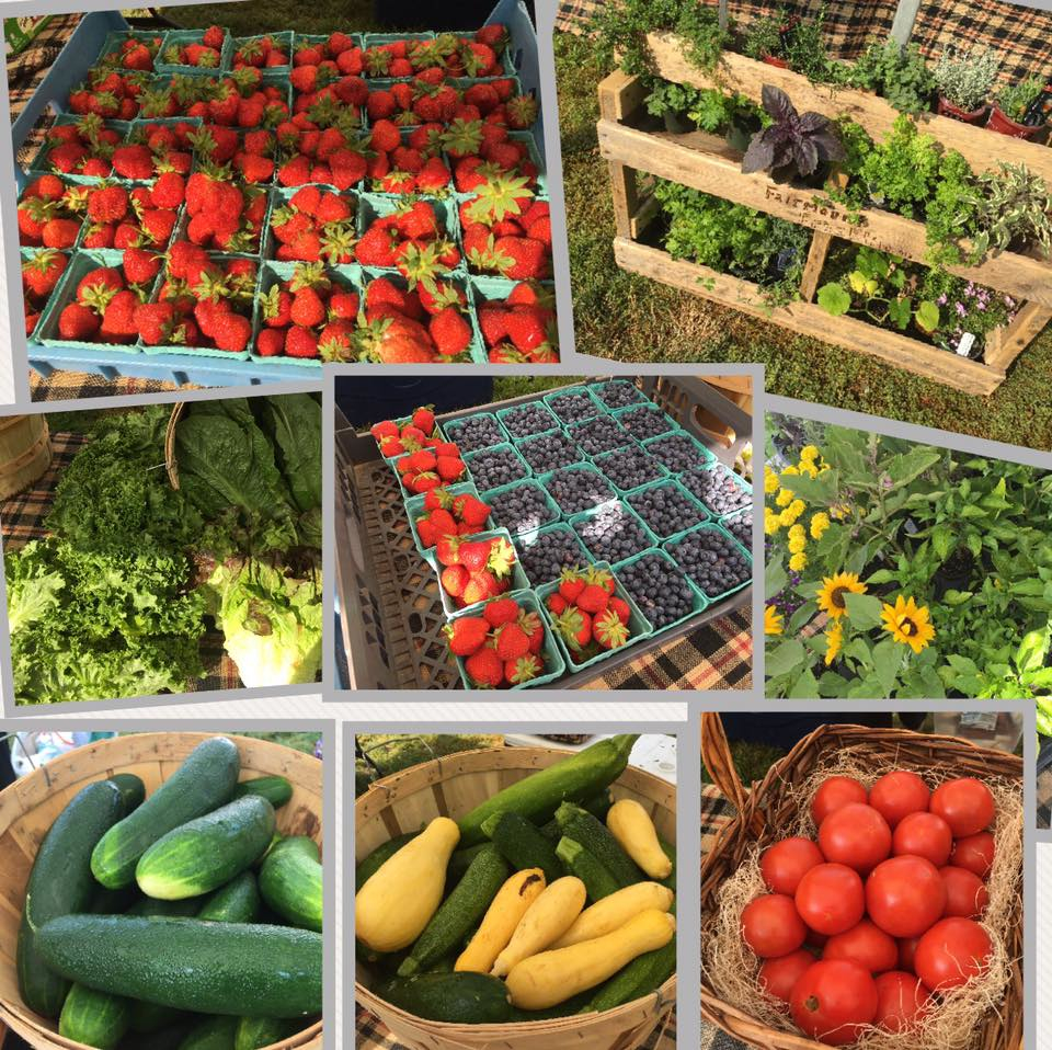 Produce, plants from Walpole Farmers Market, Walpole, Massachusetts