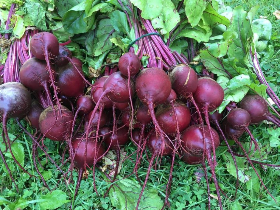 Beets from Jonathan West's farm that sources his restaurant Jonathan's in Ogunquit, Maine.