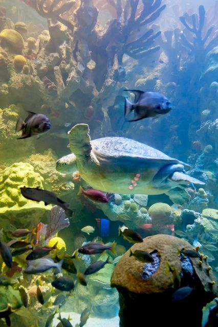 Giant Ocean Tank At The New England Aquarium In Boston