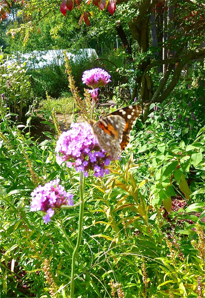Butterfly garden at Pickity Place in Mason NH