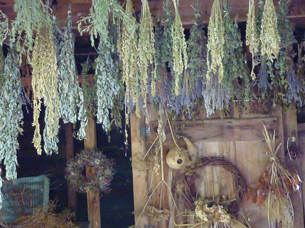 Drying herbs at Pickity Place in Mason NH.