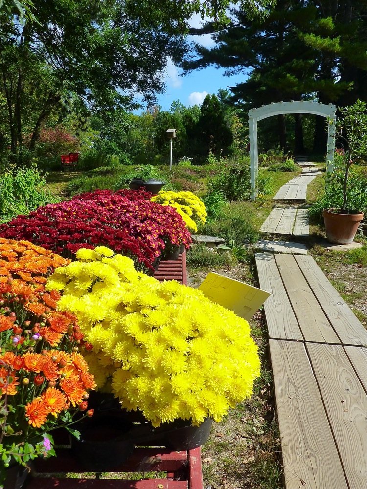 Flowers line alongside a walking path at Pickity Place in Mason, N.H.