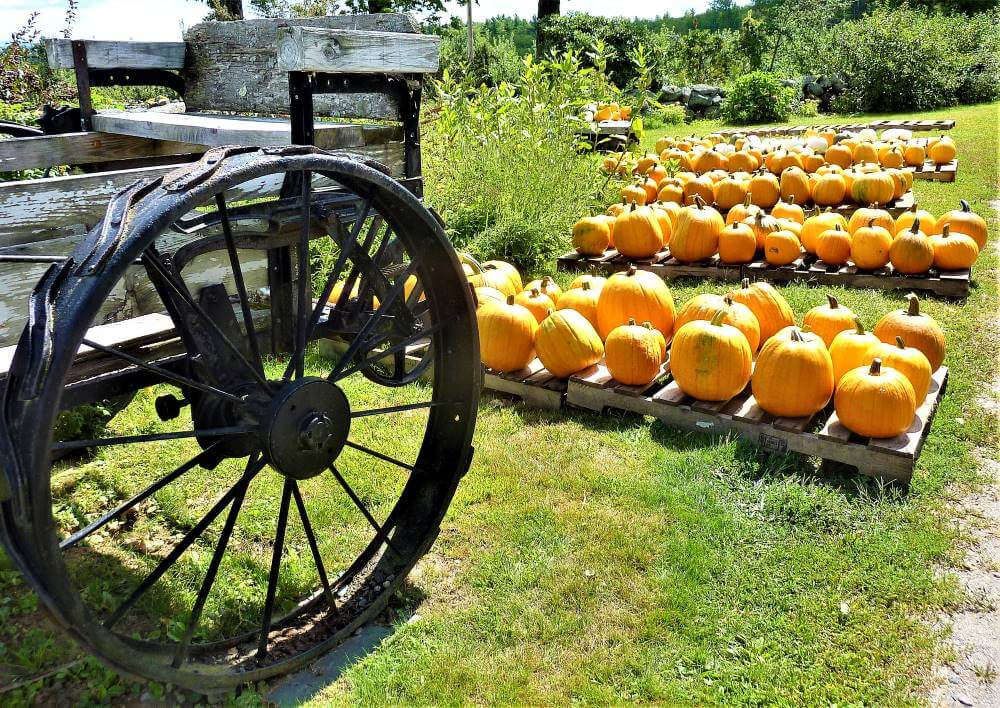 A classic New England scene at Red Apple Farm in Phillipston, Mass.