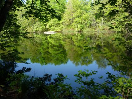 Neponset River photo, Walpole Town Forest, MA