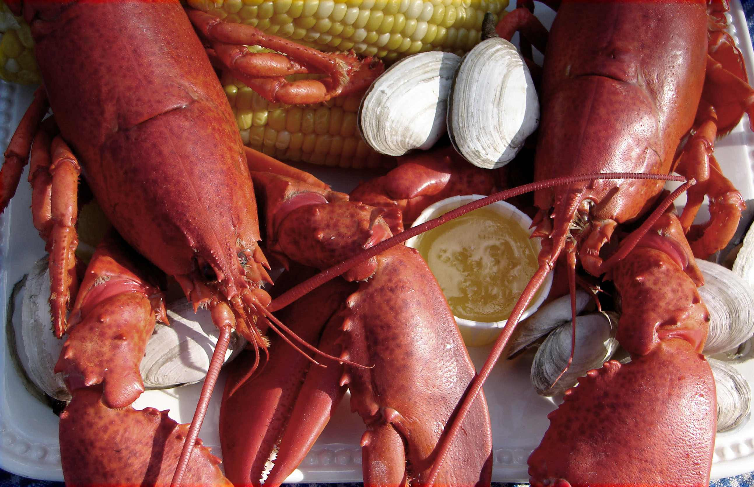 Lobsters from Woodman's of Essex, Massachusetts